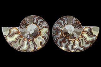 "4.3"" Cut & Polished Ammonite Fossil - Agatized For Sale, #103076"