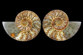 "4.65"" Cut & Polished Ammonite Fossil - Agatized For Sale, #103085"