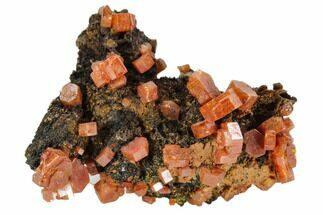 "1.1"" Red Vanadinite Crystals On Manganese Oxide - Morocco For Sale, #103568"