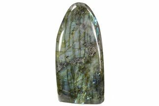 "Buy 6.3"" Tall, Flashy Polished Free Form Labradorite - #56092"