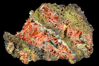 "2.2"" Bright Orange Crocoite Crystal Cluster - Tasmania For Sale, #103805"