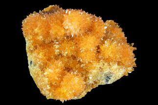"Buy 2.1"" Intense Orange Calcite Crystals - Poland - #104206"