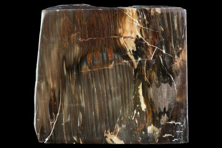 "5.8"" Petrified Wood (Araucioxylon) - Circle Cliffs, Utah"
