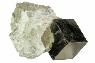 Pyrite - Fossils For Sale - #105396