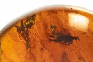 Buy Cretaceous Fossil Insect Cluster in Amber - Myanmar - #105628