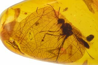 Cretaceous Fossil Wasp (Hymenoptera) in Amber - Myanmar For Sale, #105896
