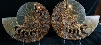 "11.2"" Split Ammonite Pair - Crystal Pockets For Sale, #7580"