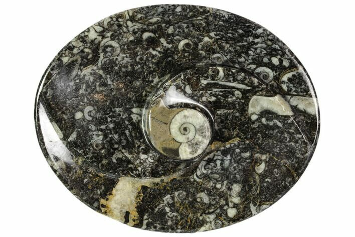 "4.7"" Oval Shaped Fossil Goniatite Dish - Morocco"