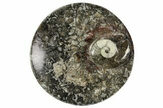 "Buy 4.2"" Round Fossil Goniatite Dish - Morocco - #108016"
