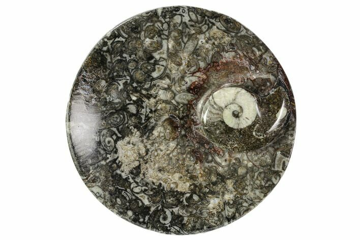 "4.2"" Round Fossil Goniatite Dish - Morocco"