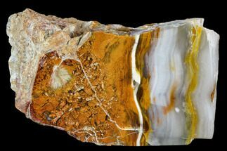 "4.4"" Petrified Wood (Araucioxylon) - Circle Cliffs, Utah For Sale, #110114"