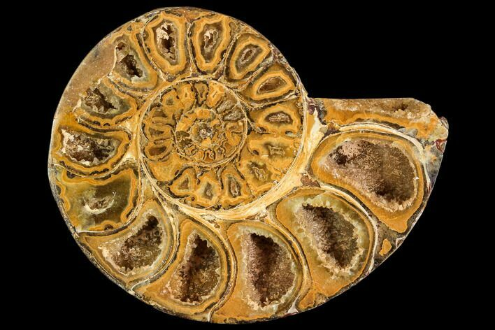 "3.1"" Sliced, Agatized Ammonite Fossil (half) - Jurassic"