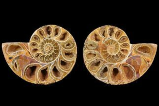 "3.6"" Cut & Polished, Agatized Ammonite Fossil (Pair)- Jurassic For Sale, #110765"