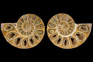 "Buy 2.7"" Cut & Polished, Agatized Ammonite Fossil (Pair)- Jurassic - #110767"