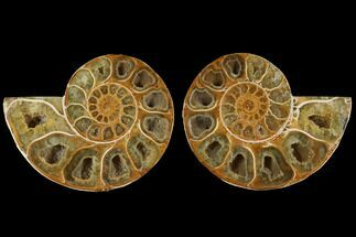 "3.1"" Cut & Polished, Agatized Ammonite Fossil (Pair)- Jurassic For Sale, #110780"