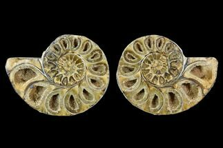 "3.3"" Cut & Polished, Agatized Ammonite Fossil (Pair)- Jurassic For Sale, #110783"