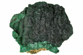 "2.8"" Silky Fibrous Malachite Cluster - Congo For Sale, #110489"