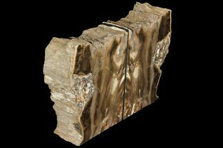 "Buy 5.6"" Petrified Wood Bookends - Oregon - #111097"