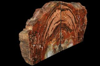 "8.5"" Tall, Arizona Petrified Wood Bookends - Red & Black For Sale, #111104"