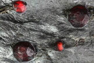 Garnet var. Almandine & Graphite - Fossils For Sale - #111837