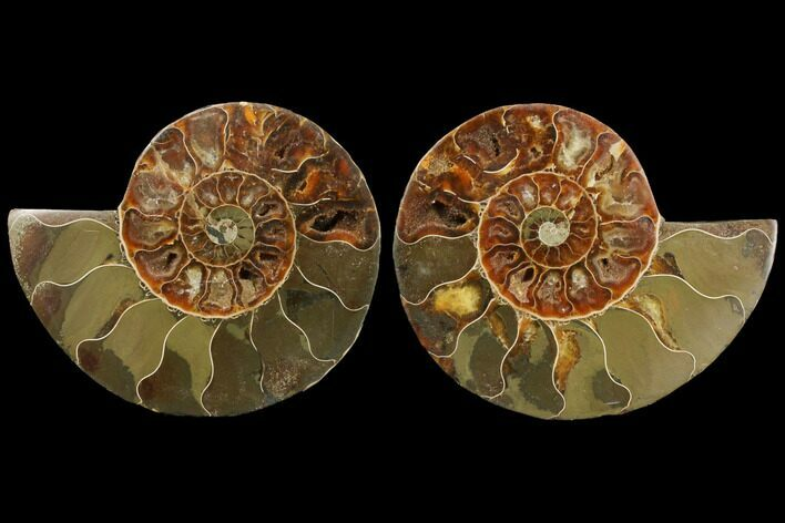 "3.7"" Agatized Ammonite Fossil (Pair) - Madagascar"
