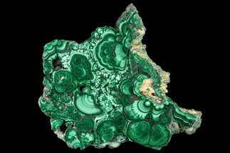 "Buy 5.1"" Polished Malachite Slice - Congo - #112975"