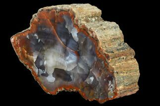"7.3"" Vibrantly Colored, Polished Petrified Wood Section - Arizona For Sale, #113378"