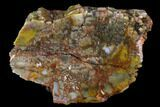 "5.9"" Vibrantly Colored, Polished Petrified Wood Section - Arizona - #113371-1"