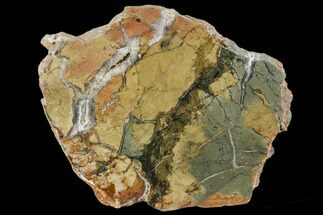 "Buy 6.1"" Polished Ibis Jasper Slab - Madagascar - #113764"