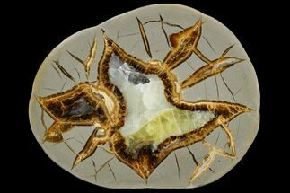 Septarian - Fossils For Sale - #114186