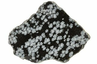 "2.6"" Polished Snowflake Obsidian Section - Utah For Sale, #114200"