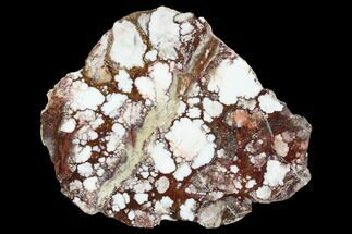 Magnesite & Hematite - Fossils For Sale - #114306