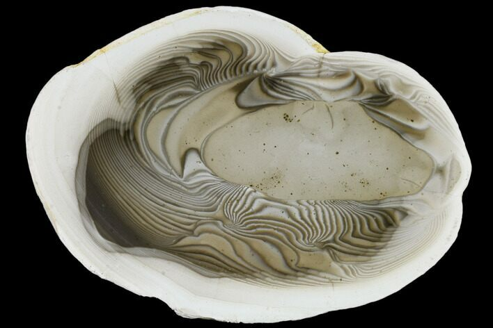 "8.1"" Polished Striped Flint Slab - Poland"