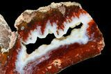 "8.4"" Cady Mountain Plume Agate Slab - California - #114822-2"