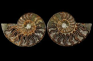 "4.9"" Sliced Ammonite Fossil (Pair) - Crystal Chambers For Sale, #114860"