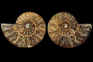 "4"" Sliced Ammonite Fossil (Pair) - Agatized For Sale, #114866"