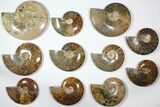 "Wholesale Lot: 6.2 - 9.2"" Polished Whole Ammonite Fossils - 11 Pieces - #116725-1"
