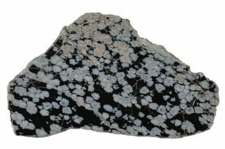 "Buy 4.1"" Polished Snowflake Obsidian Section - Utah - #117772"