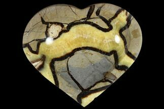 Septarian - Fossils For Sale - #117294