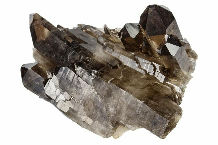 "3.1"" Dark Smoky Quartz Crystal Cluster - Brazil"