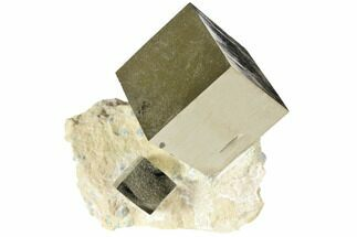 Pyrite - Fossils For Sale - #118257
