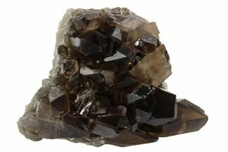 "3.1"" Dark Smoky Quartz Crystal Cluster - Brazil For Sale, #120755"