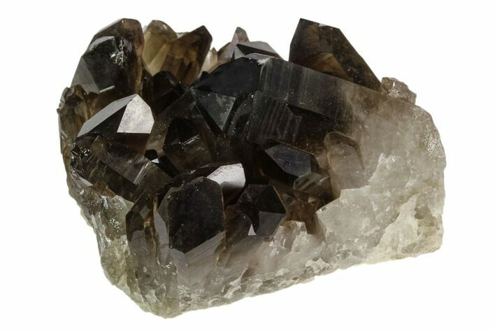 "3.3"" Dark Smoky Quartz Crystal Cluster - Brazil"