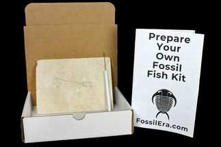 Prepare Your Own Fossil Fish Kit - Knightia or Diplomystus For Sale, #121292
