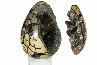 "Buy Bargain, 9"" Septarian ""Dragon Egg"" Geode - Removable Section - #121276"