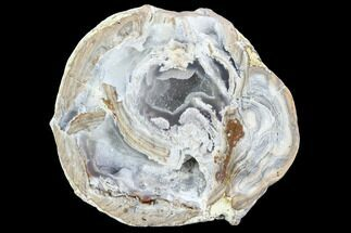 "3.5"" Crystal Filled Dugway Geode (Polished Half) For Sale, #121655"