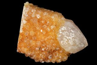 "1.7"" Sunshine Cactus Quartz Crystal - South Africa For Sale, #122309"