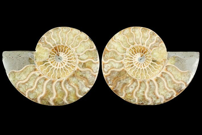 "4.4"" Sliced Ammonite Fossil (Pair) - Agatized"