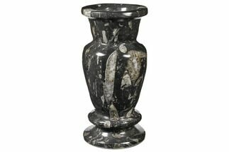 "8.7"" Limestone Vase With Orthoceras Fossils For Sale, #122468"