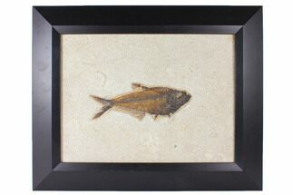 Diplomystus dentatus - Fossils For Sale - #122640